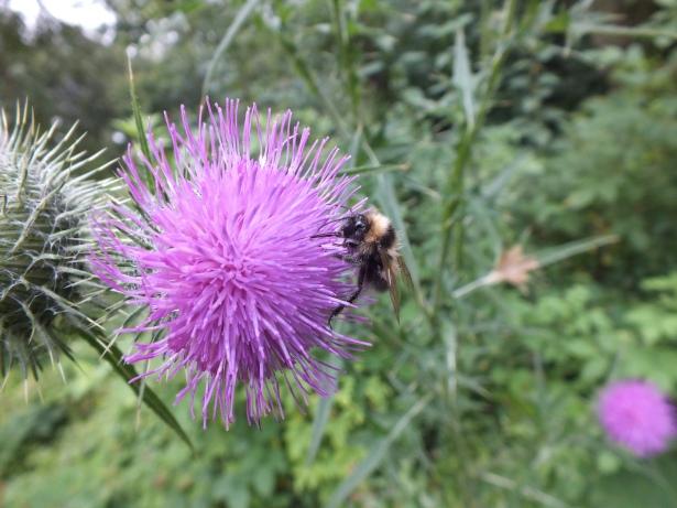 Macro purple with bee