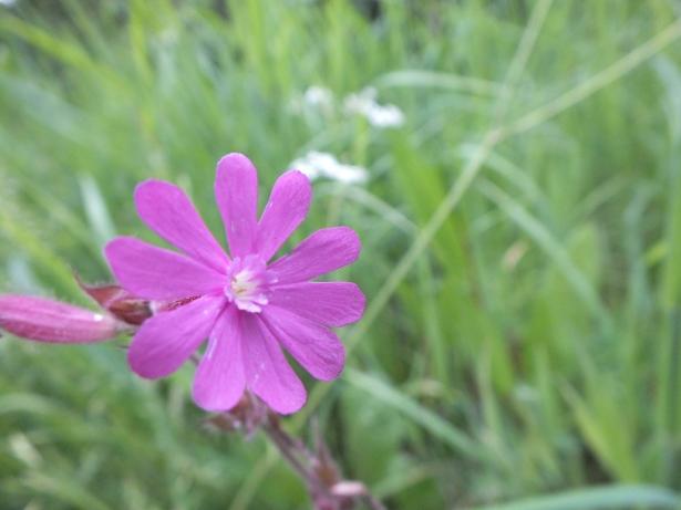 Purple_front