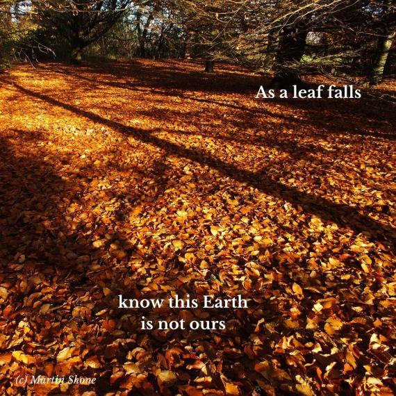 As a leaf falls